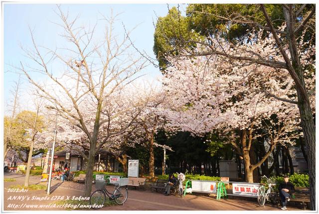 【京阪自由行】賞櫻推薦免費景點 大阪長居公園 ♥ 初見櫻滿開的感動