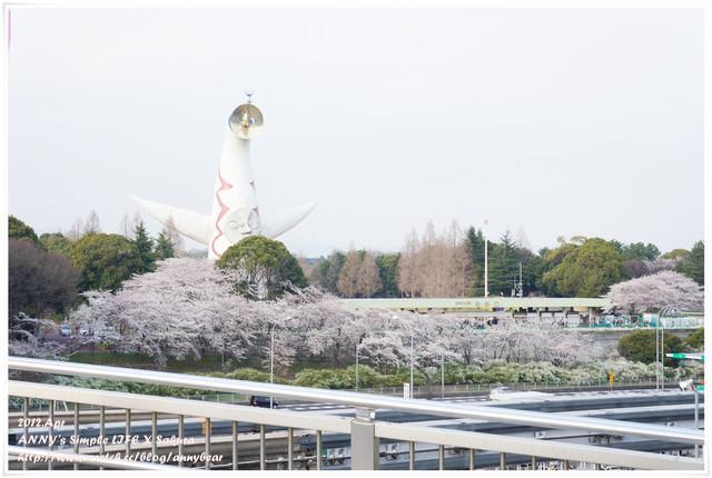 【京阪自由行】萬博紀念公園 賞櫻與親子遊好去處 ♥ 地標太陽之塔好高